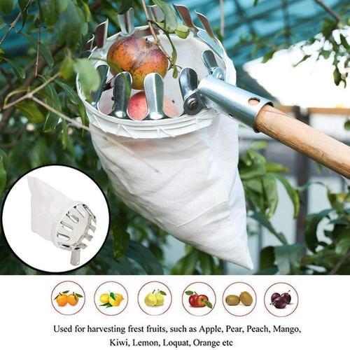 Dụng cụ hái trái cây giảm nguy cơ hư hỏng trái cây