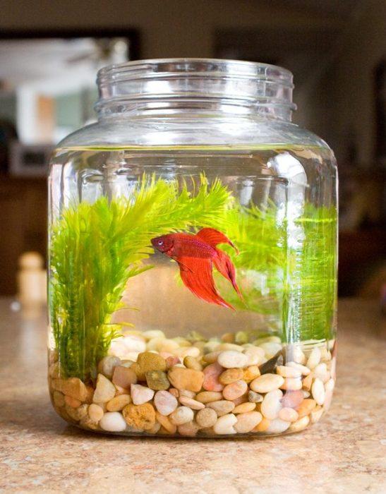 #10: Lọ thủy tinh nuôi cá